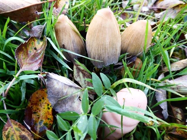 Magic Mushrooms 2015