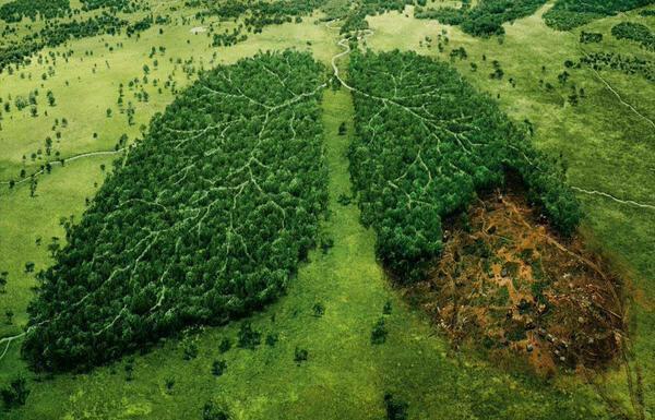 Datos que te impresionarán sobre el Amazonas