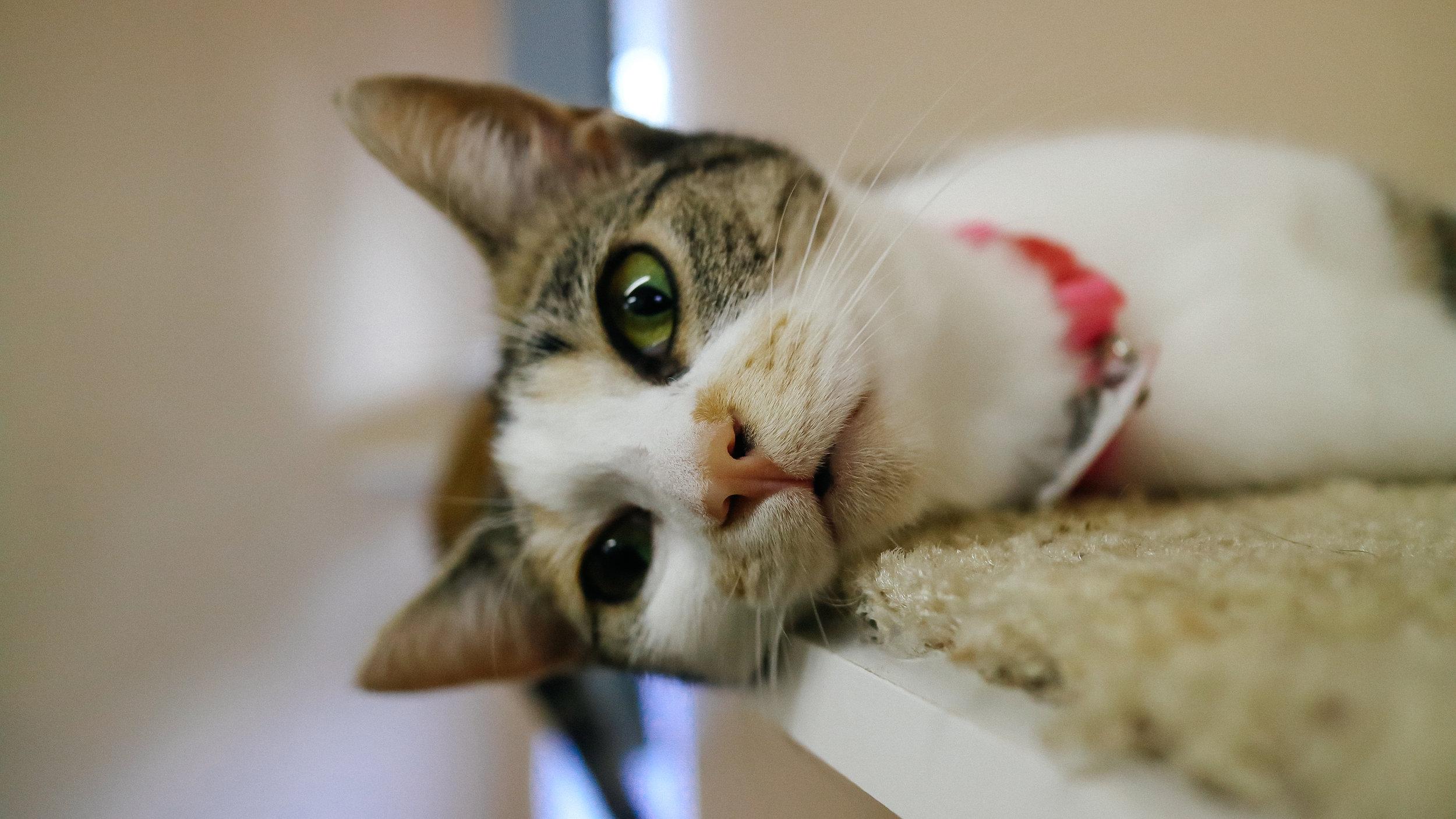meow (3).jpg