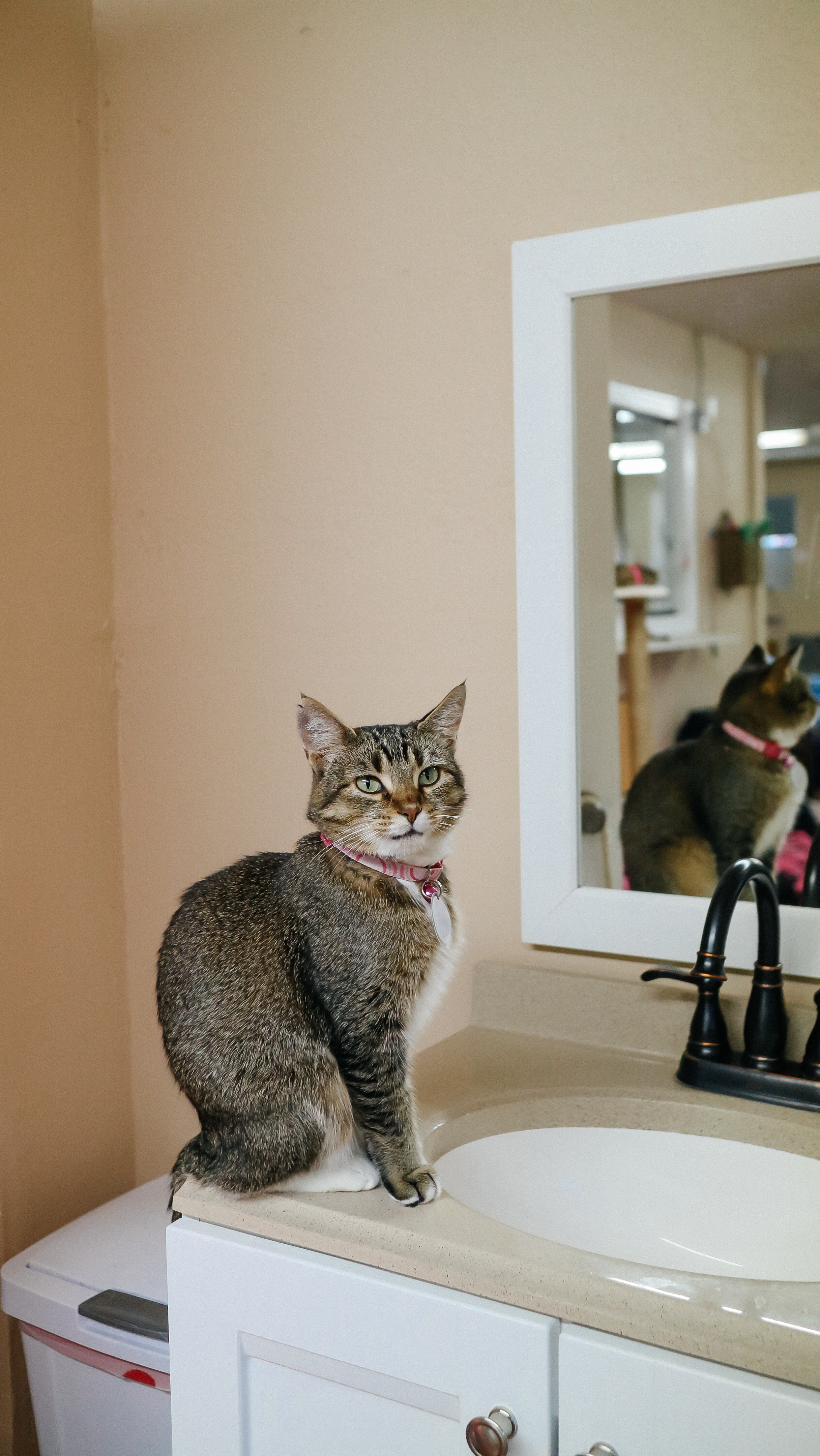 meow (5).jpg
