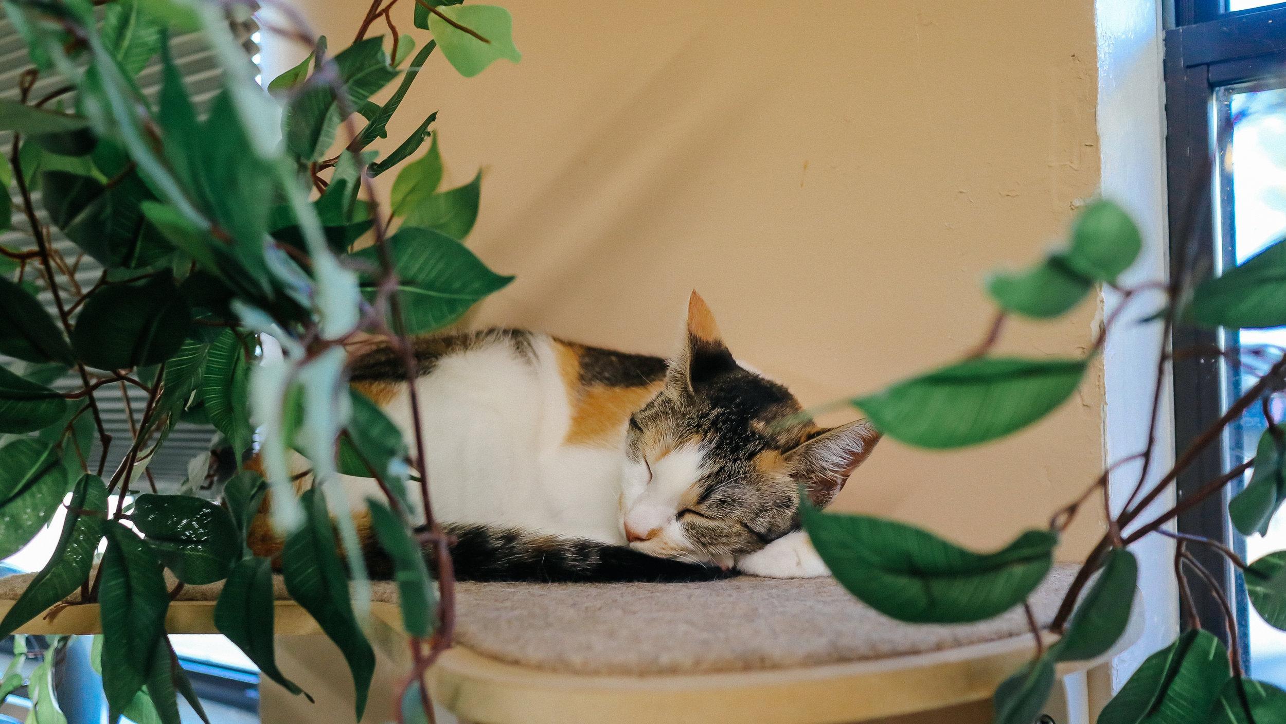 meow (12).jpg