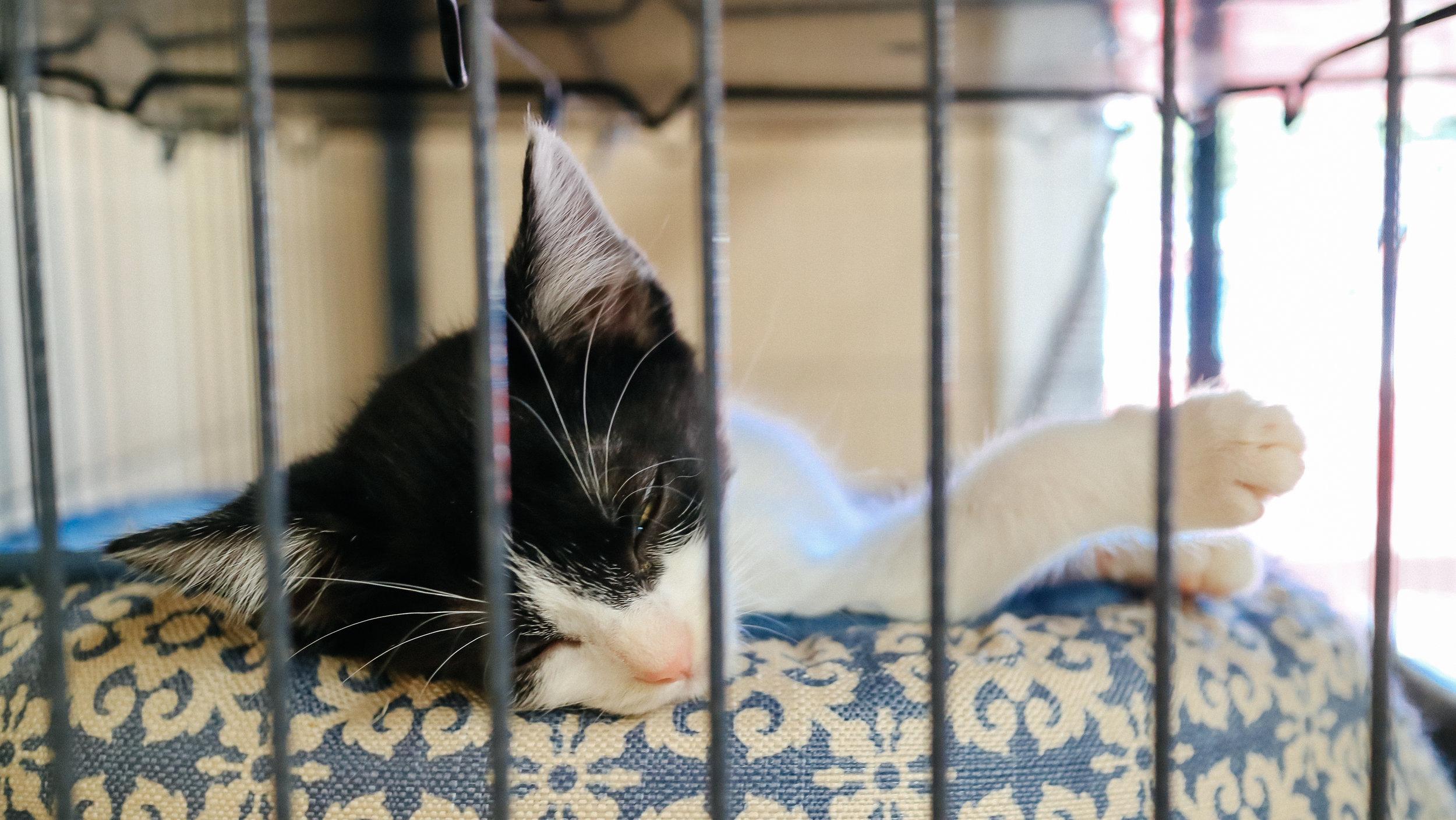 meow (11).jpg