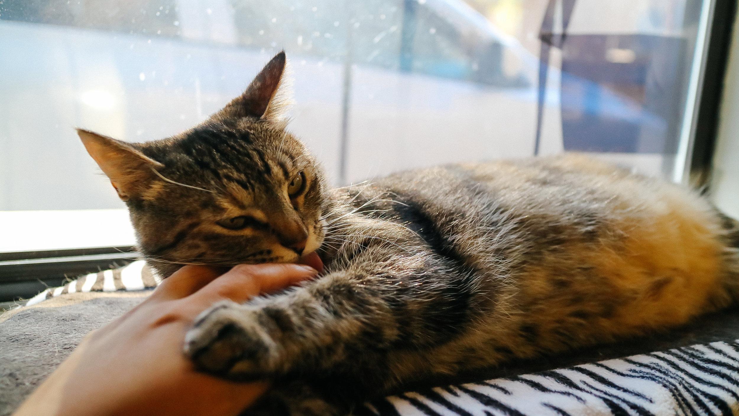meow (13).jpg