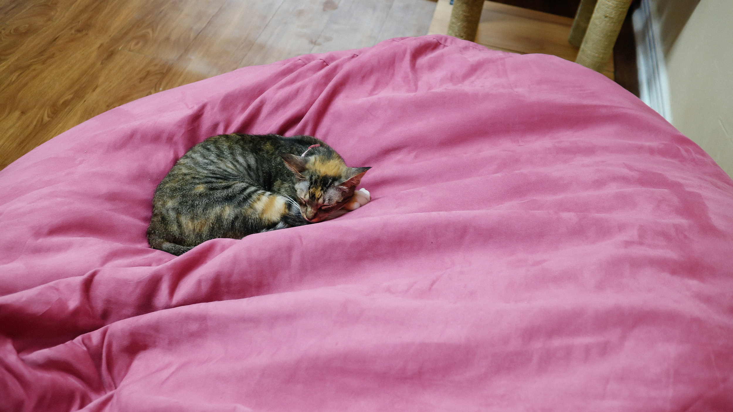 meow (17).jpg