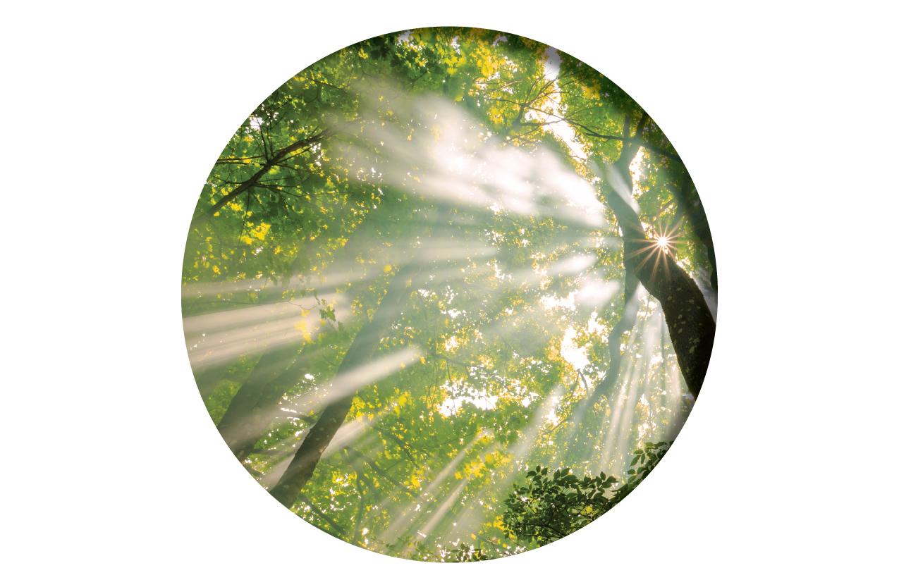 Charlottesville energy healing