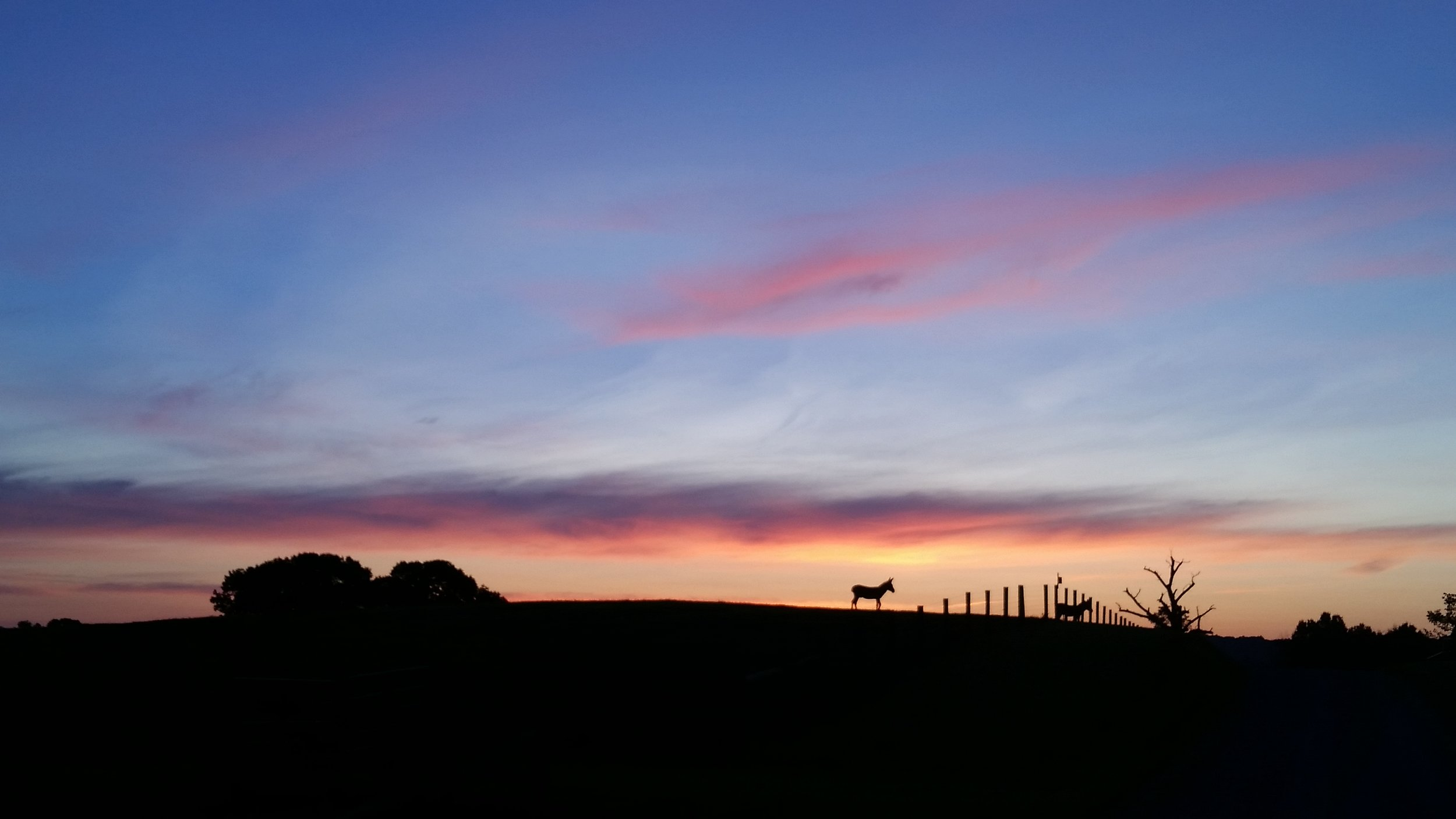 Our donkey friends were such lovely silhouettes in the dawn.