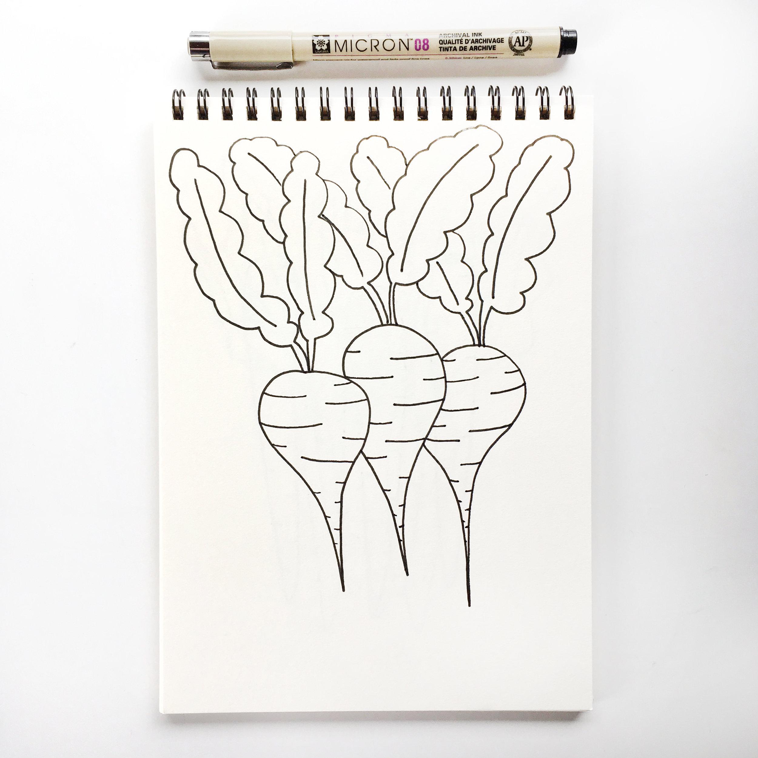 Beets Drawing in Sketchbook with Pen.jpg