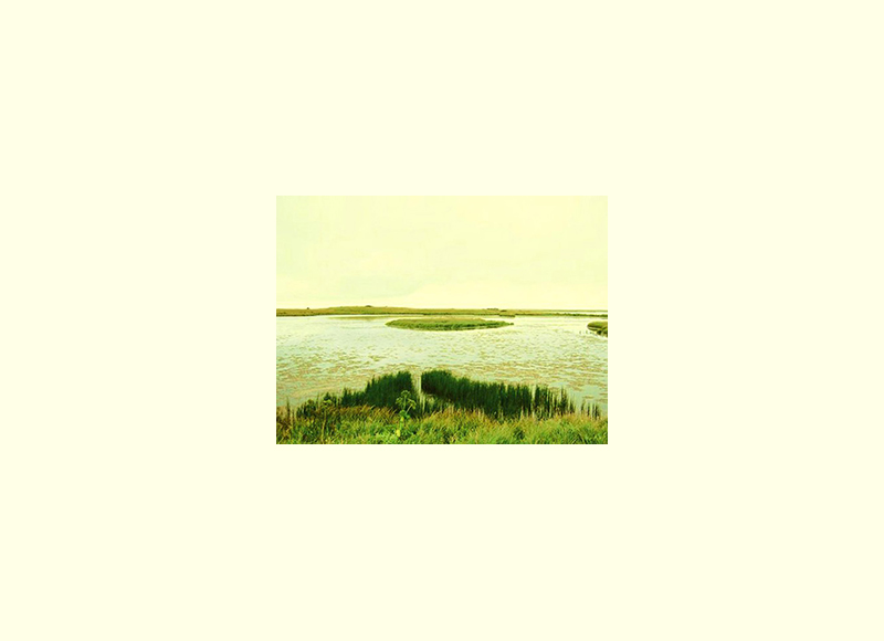 wetlandsSS.jpg