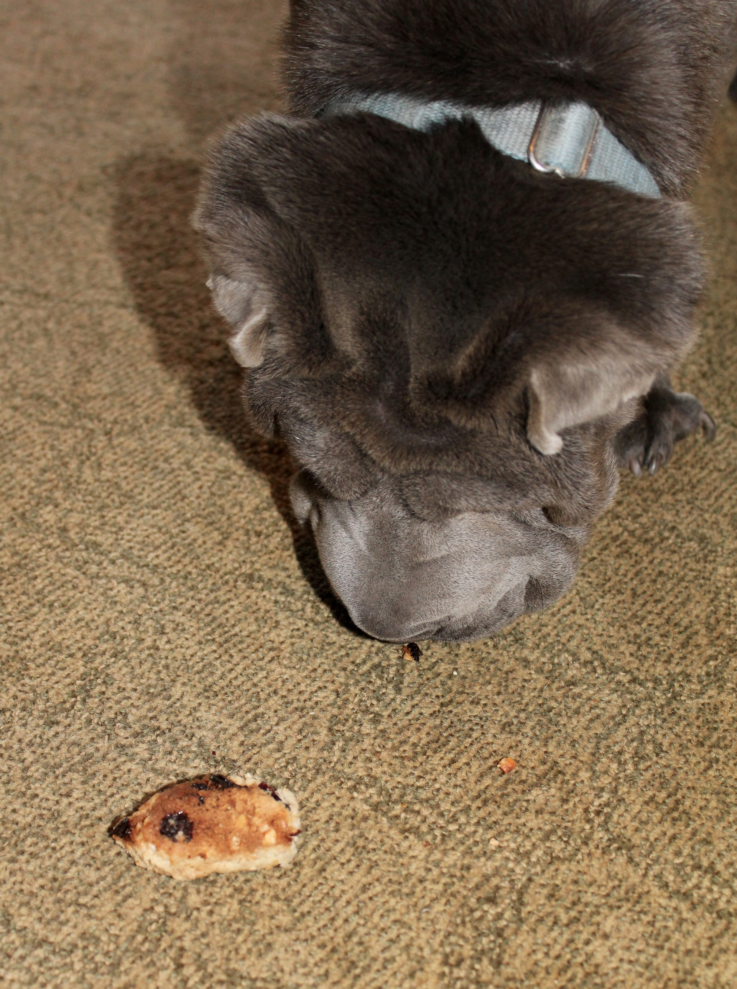 Version 4 was such a failure that the Sharpei spat it out and growled at it.