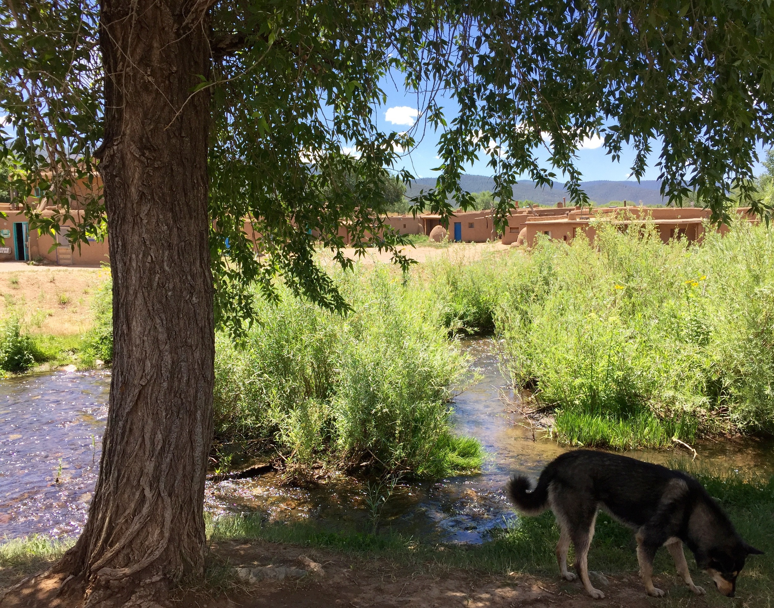 There are many dogs who live in the historic Pueblo, and are totally friendly and at home.