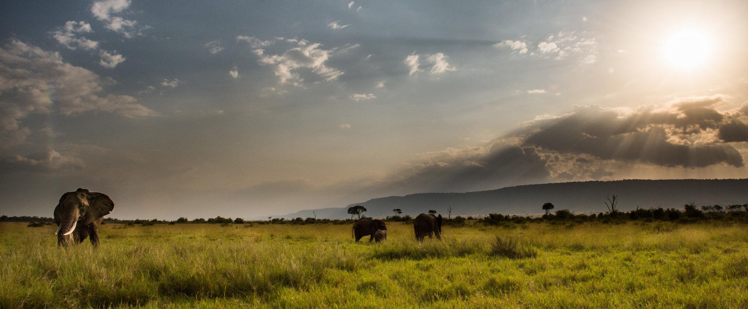 Elephant, Maasai Mara National Reserve, Kenya. Photo:   © Jon McCormack | Conservation International