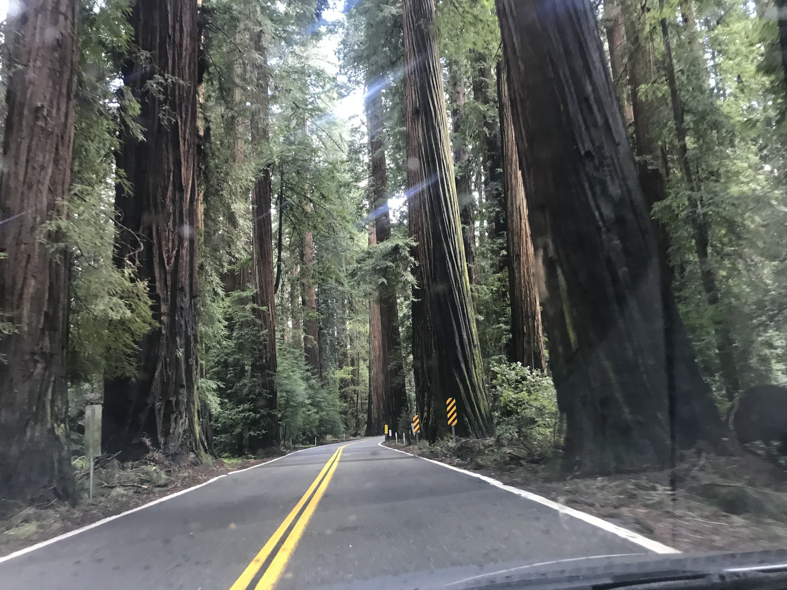 epic drive—California's redwood coast…you must visit this place! :-)