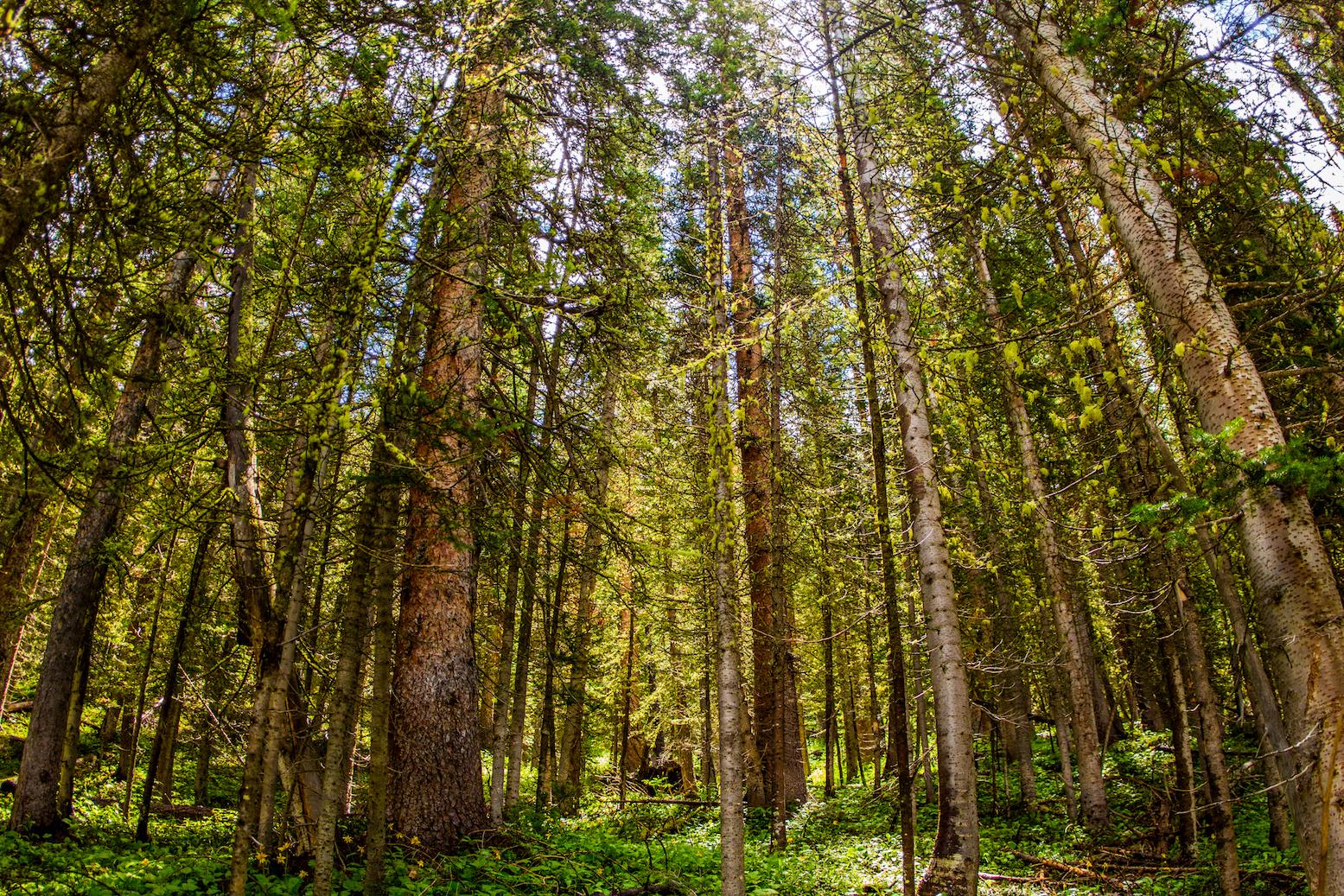 Gunnison National Forrest