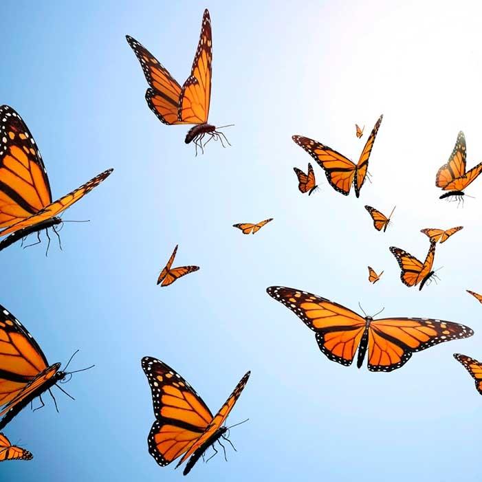 butterflies_1200px.jpg