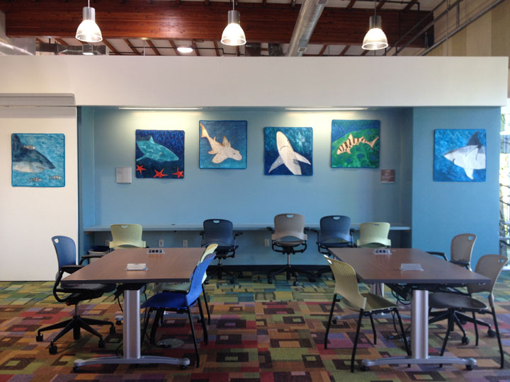 Scotts Valley Library - solo show