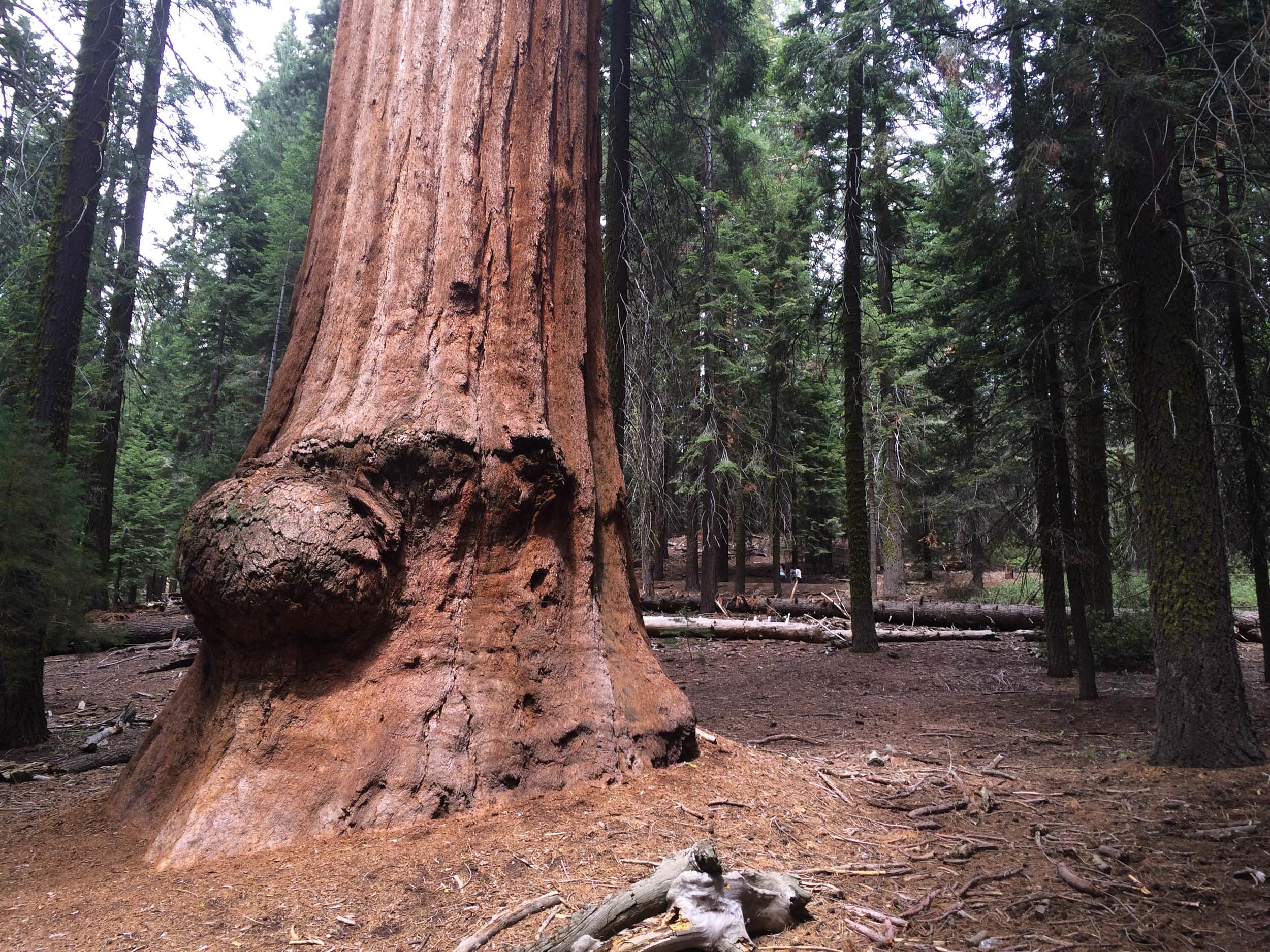 Kelly_Megan_NationalParks_Sequoia_1.jpg
