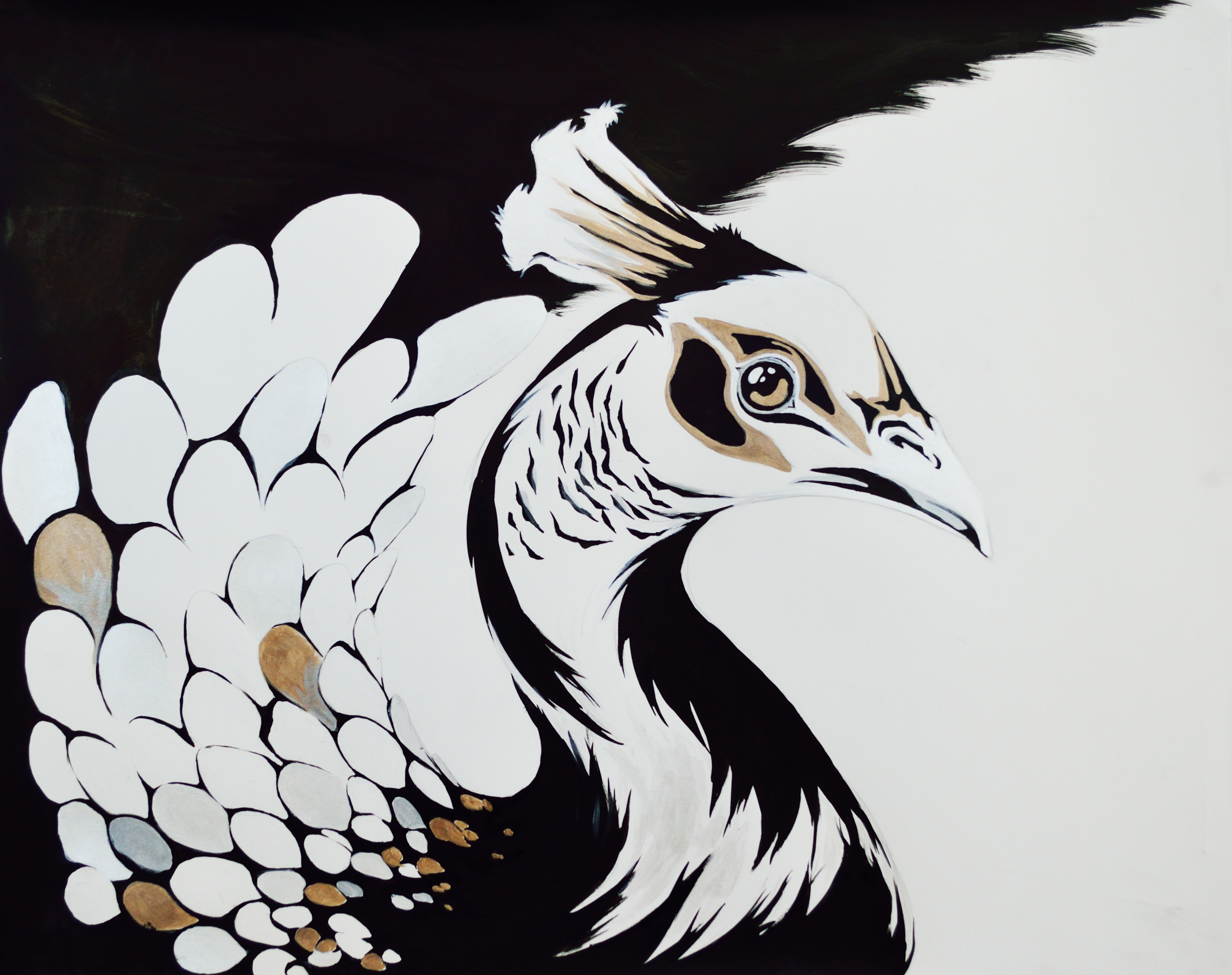 Peacock (pattern series)