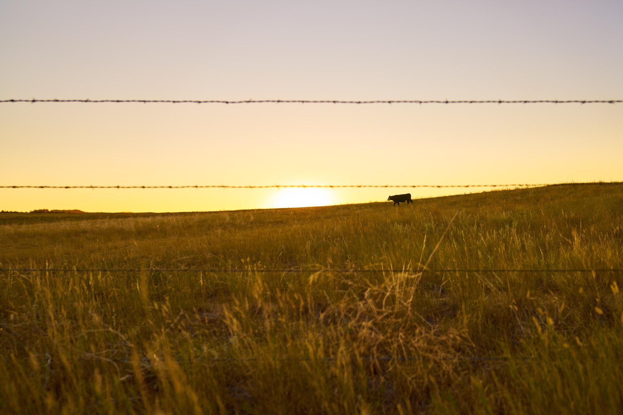 AMVISUALS_Erin_Wyoming_Editorial_DSC1537.jpg