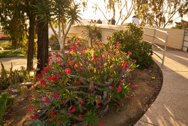 AMVISUALS-2019-Balboa-Park-Rose Garden-13.jpg