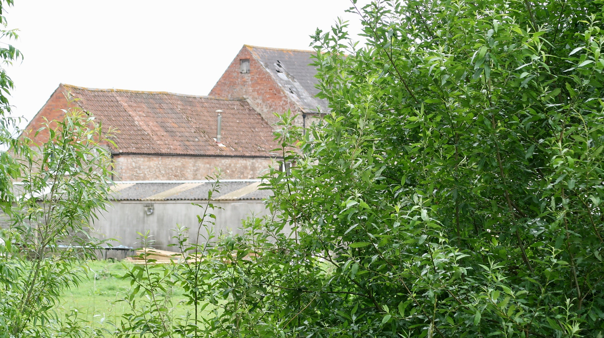 Farm buildings through the Willow trees.jpg