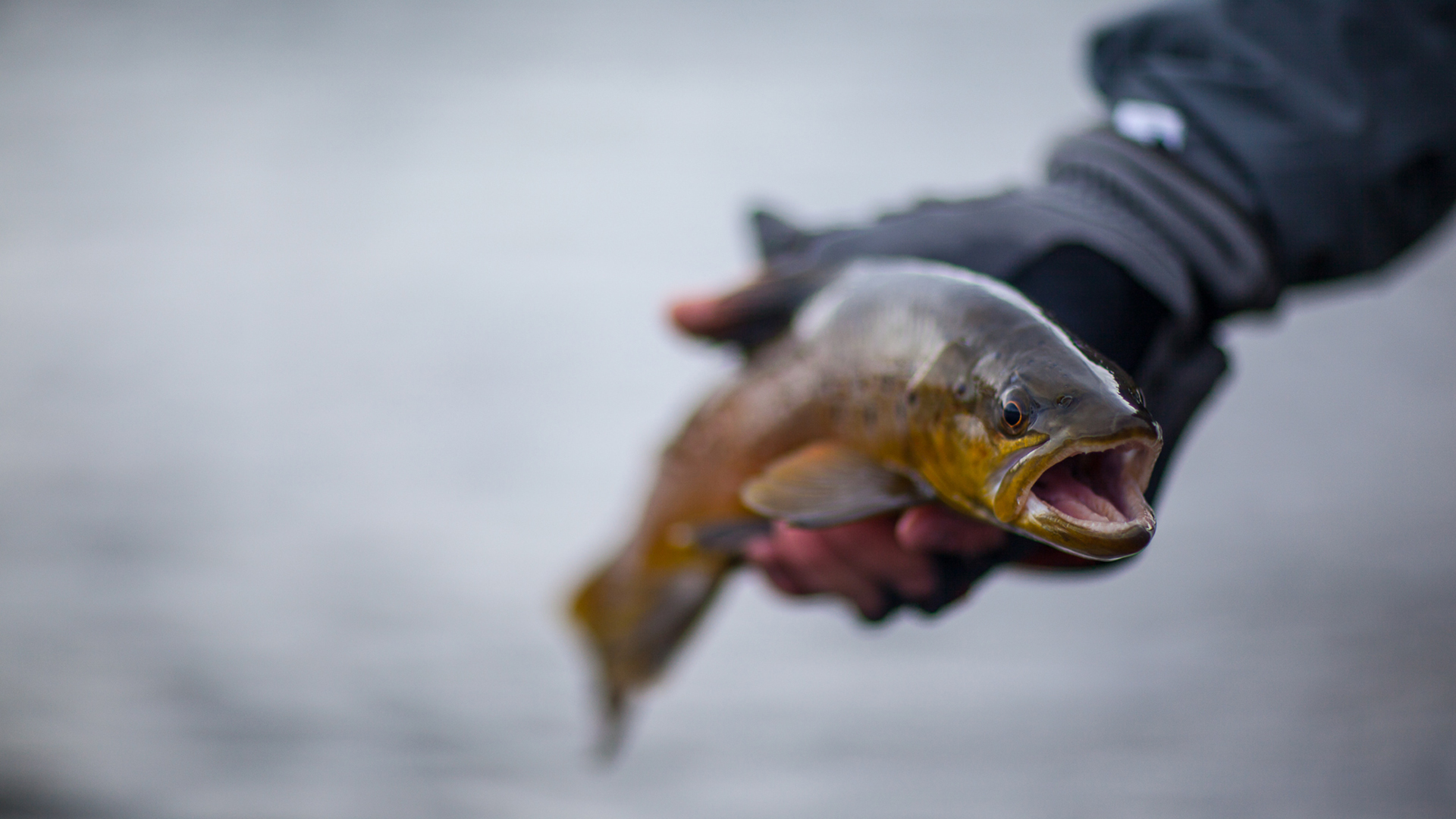 Thinktomake-Flyfishing-Photography_Trout.jpg