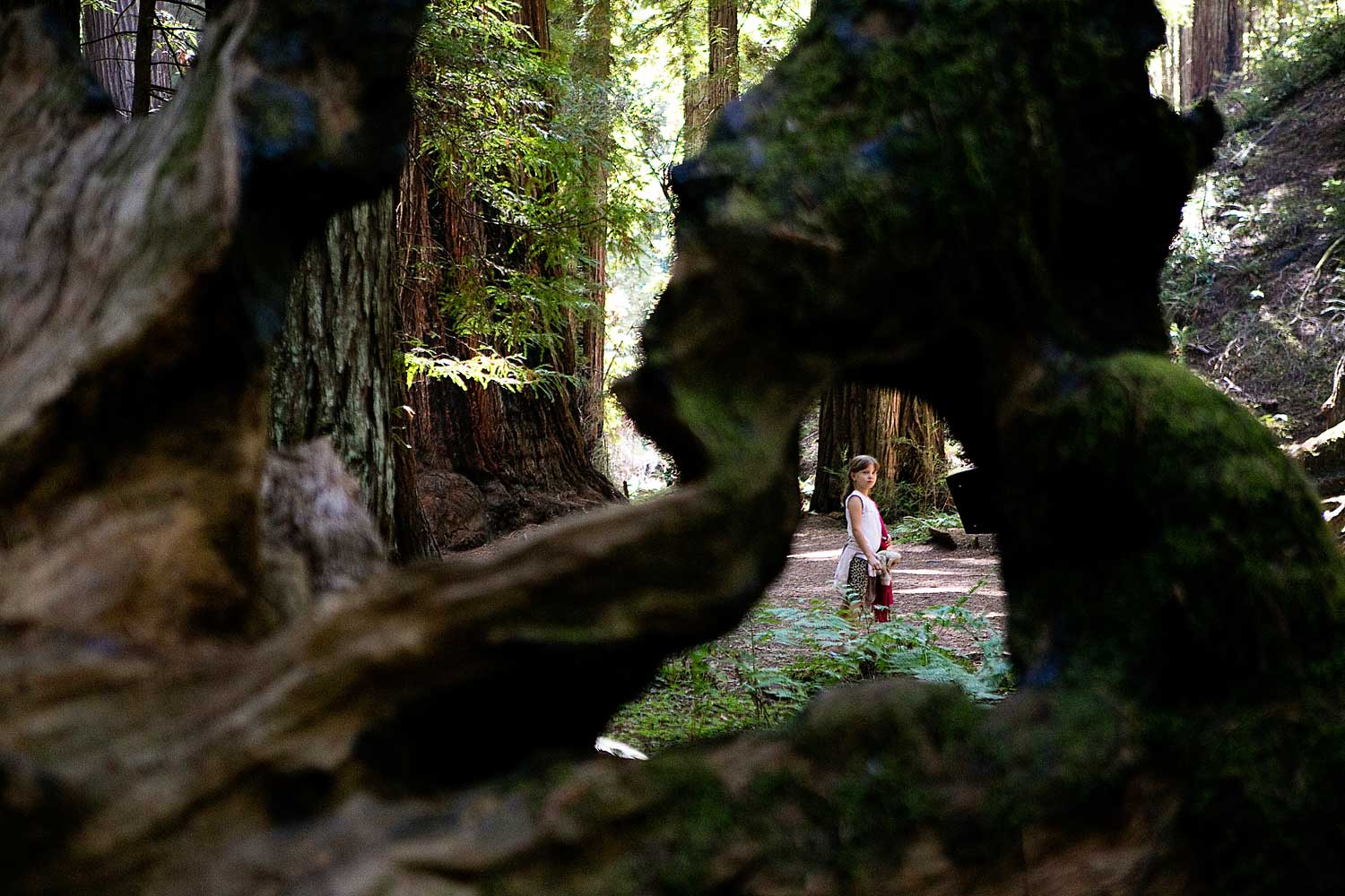 Fort Bragg, Montgomery Woods, Amy Wright Photography