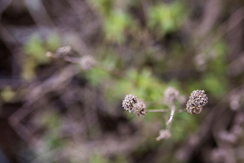 Elfin Forest, Morro Bay California, Amy Wright Photography