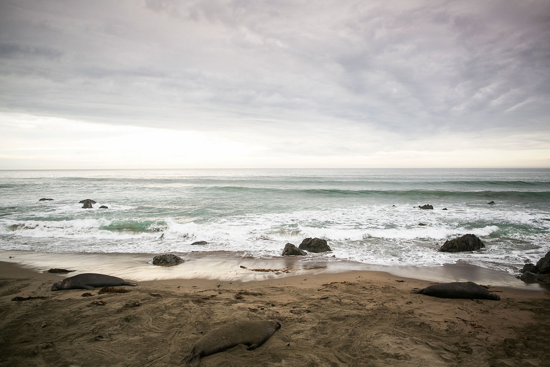 Elephant Seal Rookery, San Simeon, Morro Bay, Amy Wright Photography