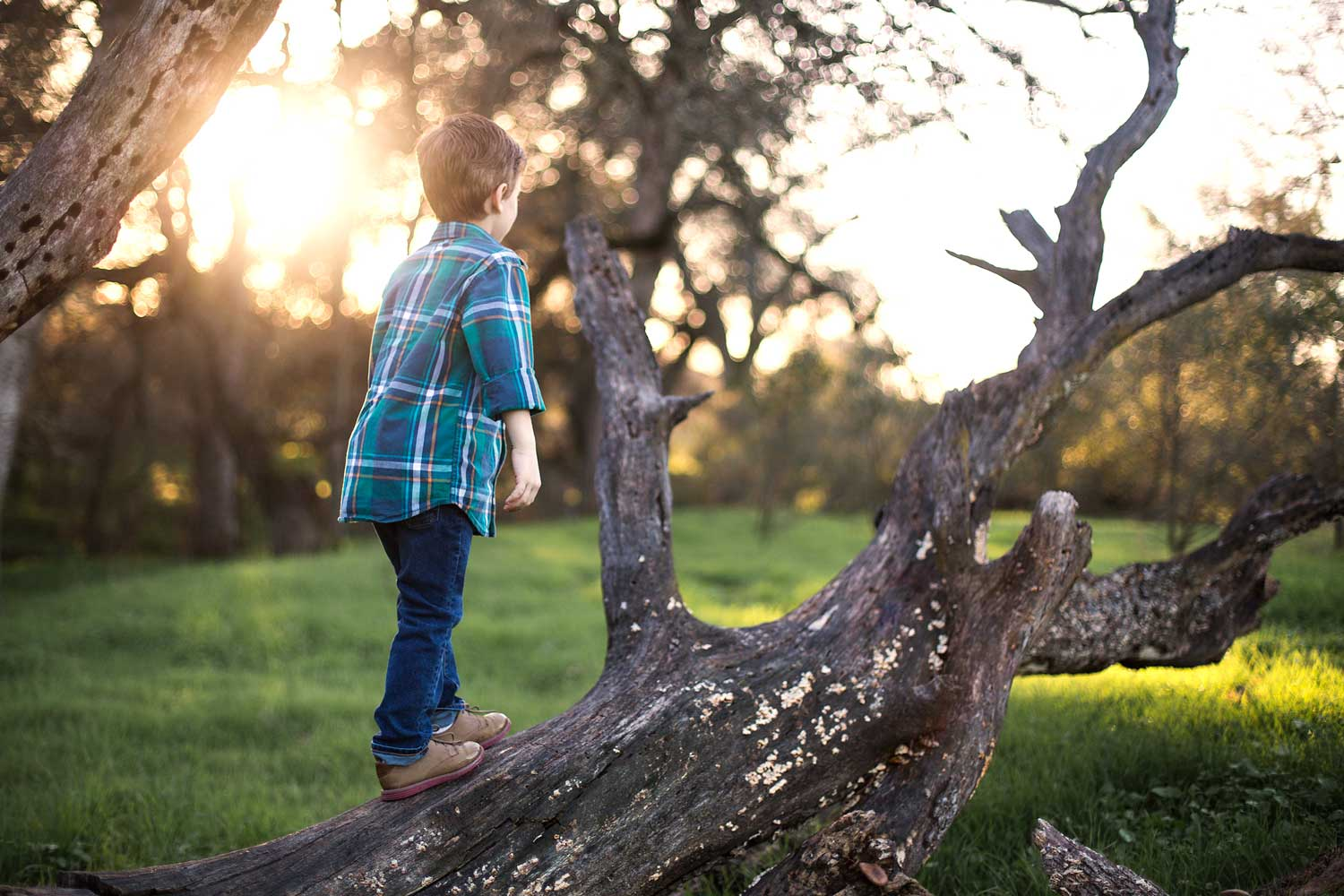 A boy climbs on a tree during a photoshoot in Roseville, California.