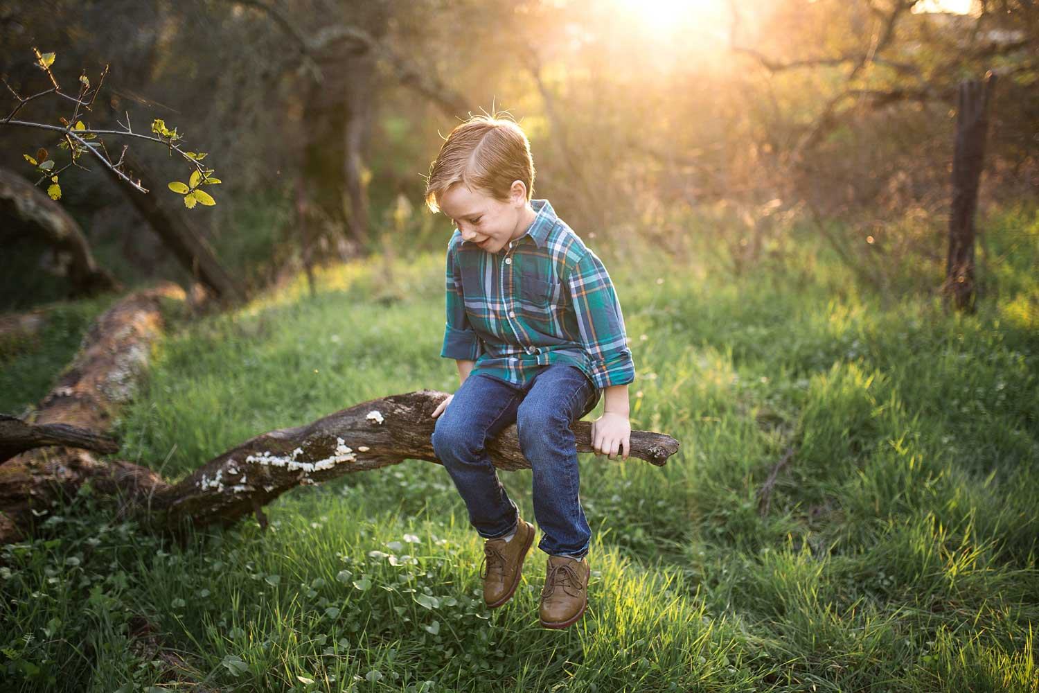A boy sits on a branch of a tree in beautiful light while getting pictures taken with Amy Wrigth Photography in Roseville, California.