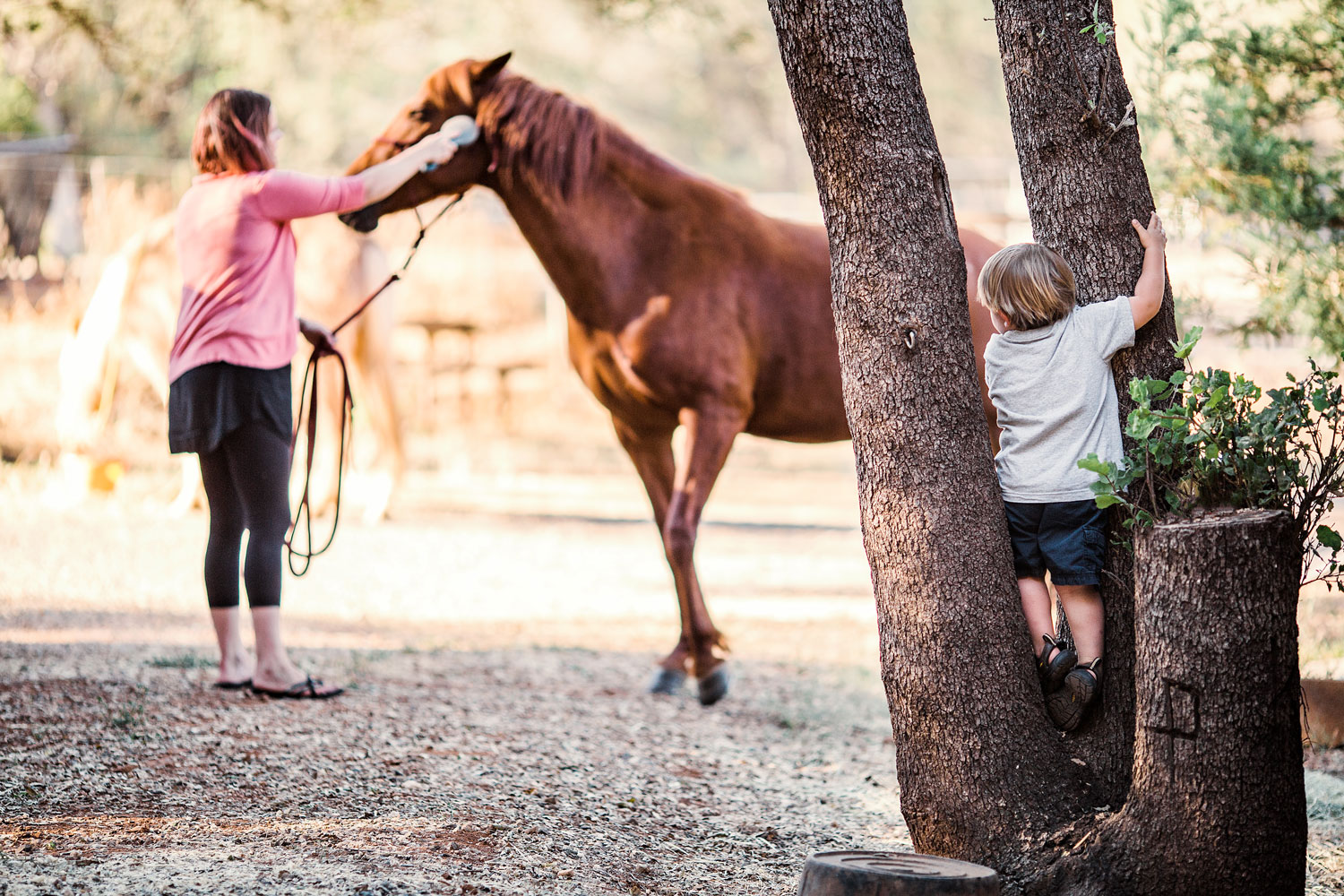 A boy watches as a horse is being prepared to ride during a family lifestyle photo session in Northern California.