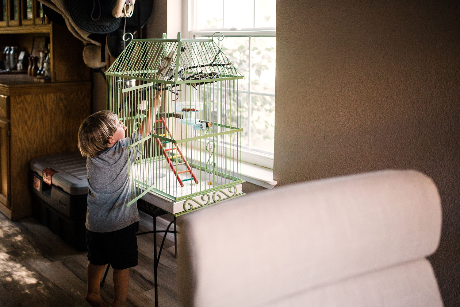 A toddler reaches for a pet bird during an in-home lifestyle family photography session in Sacramento, California.