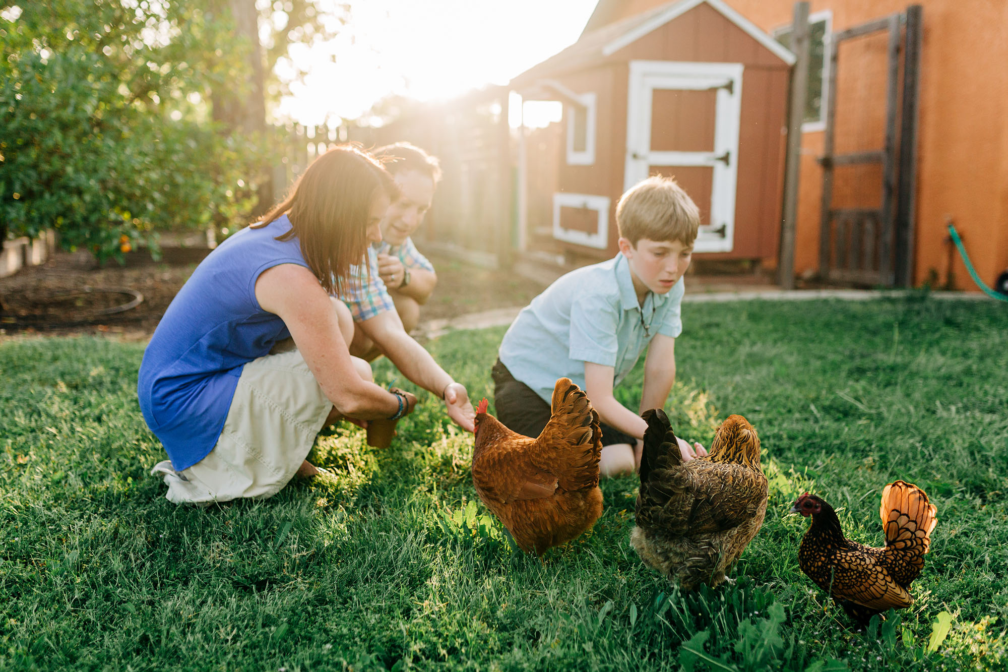 A family interacts with their chickens during a laid back lifestyle photo session in Roseville, California with local photographer Amy Wright.