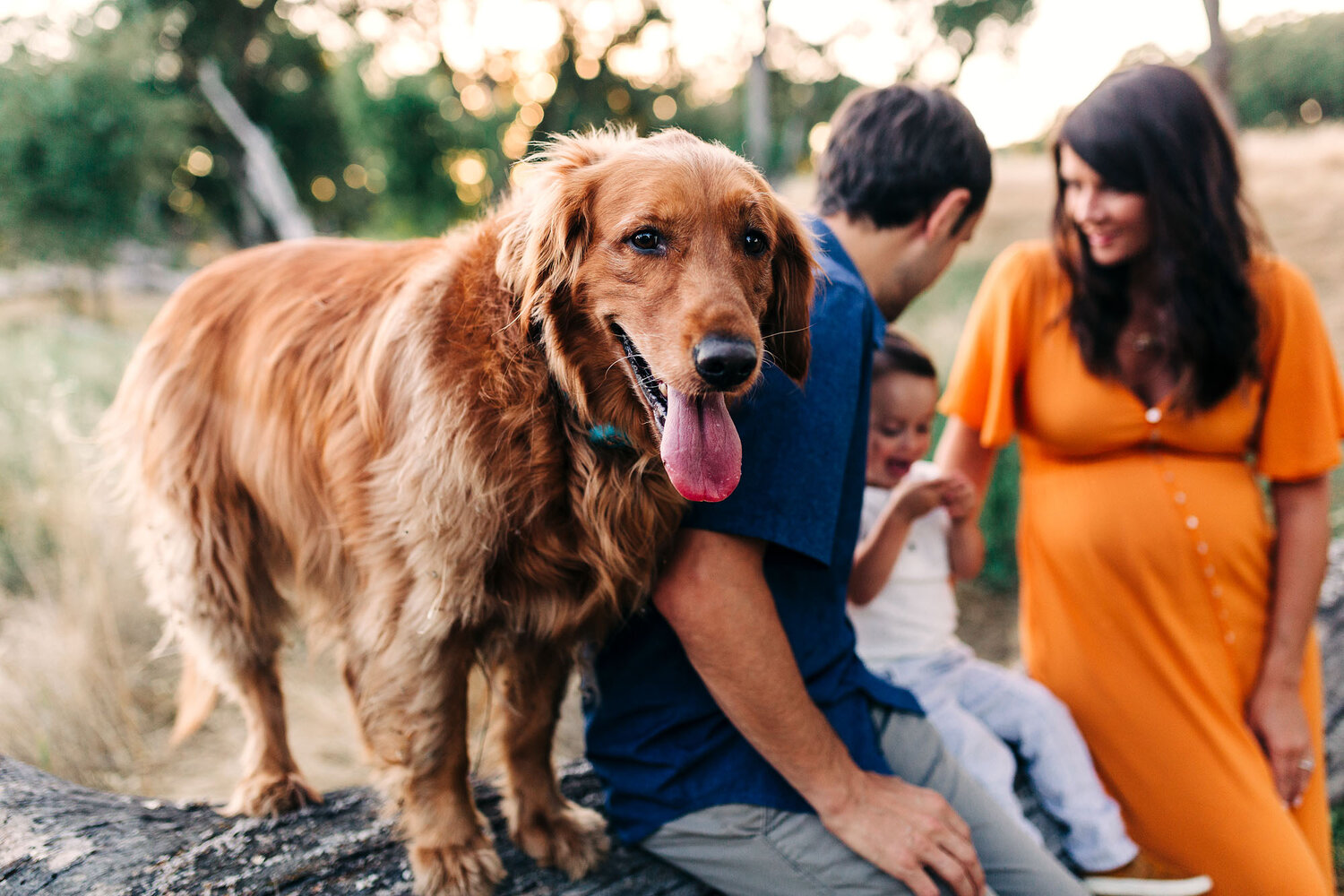 A family gets their pictures taken with their dog with maternity photographer Amy Wright in Roseville, California.