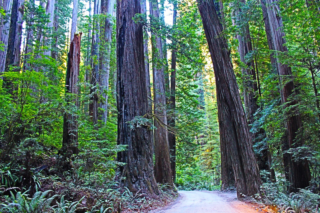 Monday, September 10, 2018 - BreakfastGroup excursion to hike in the famous redwoodsDinner out