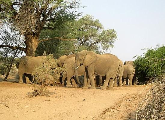 piment anti éléphants.jpg