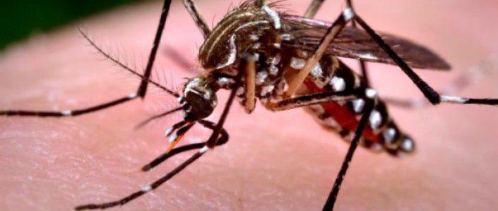 Dengue-705x300.jpg