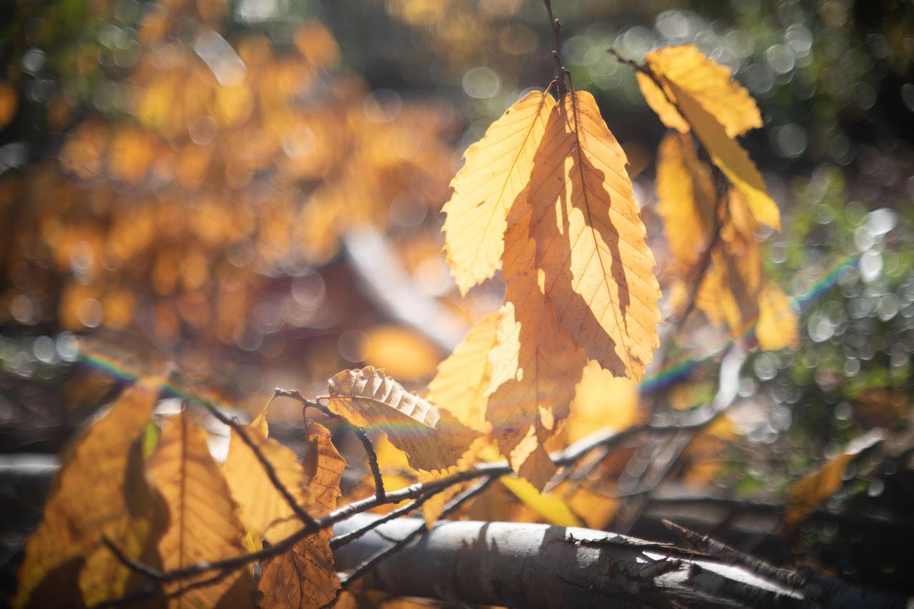 leaves close.jpg