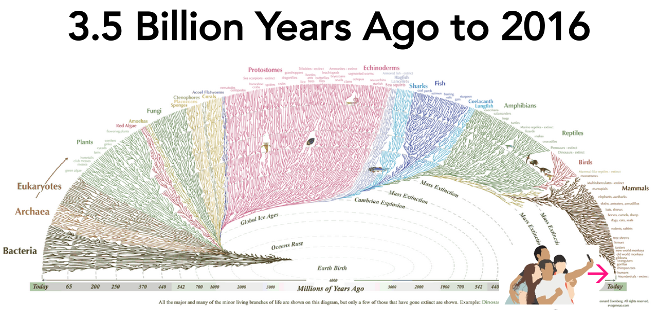 Current mapping of the history of life on Earth. Start in the middle and fan outward.