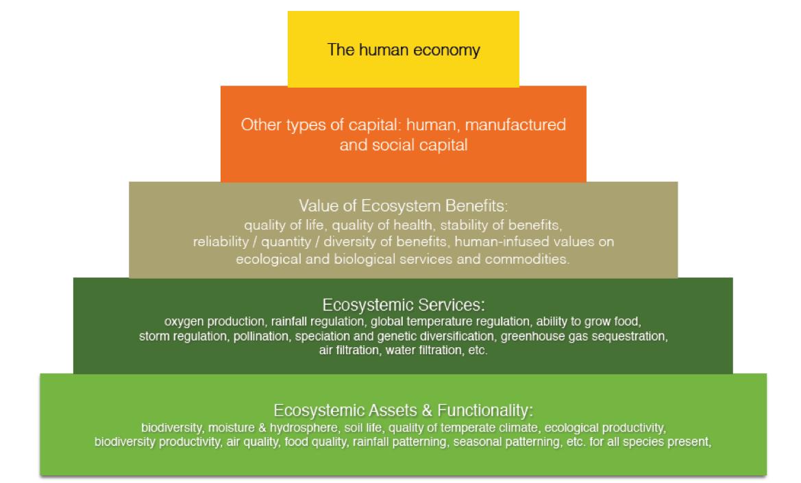 """""""The Pre-Profit Economy"""" (my graphic)"""