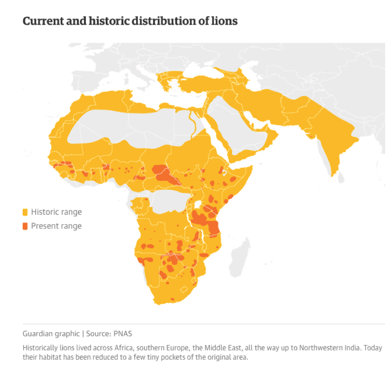 """An example of """"range reduction."""" This mapping shows range reduction of African lions. The yellow areas show lions' historical range, the orange spots show current ranges. Most of these changes have taken place since WWII. Virtually all species on Earth have undergone similar changes, due to humanity's recent rapid expansion. Slide comes from the same 2017 study linked above."""