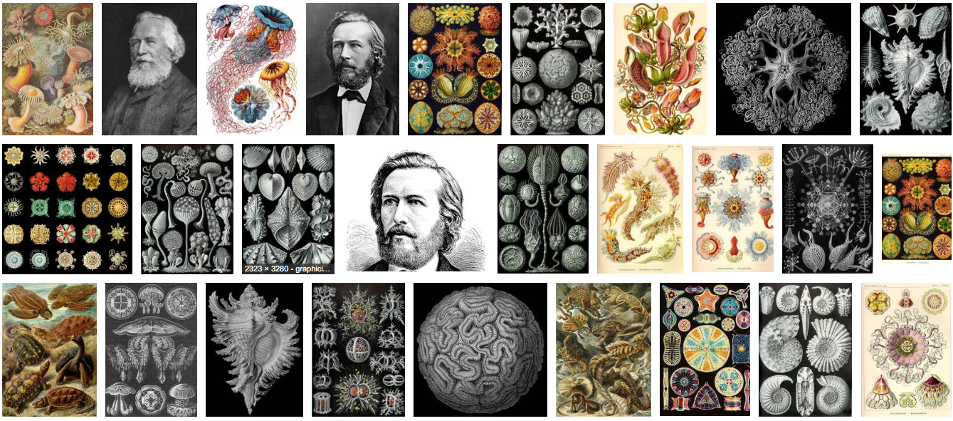 Art by, and portraits of,  Ernst Haeckel.