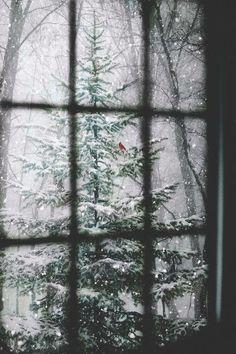 0d4e394d4957925d920964532b1956c3--winter-time-winter-snow.jpg