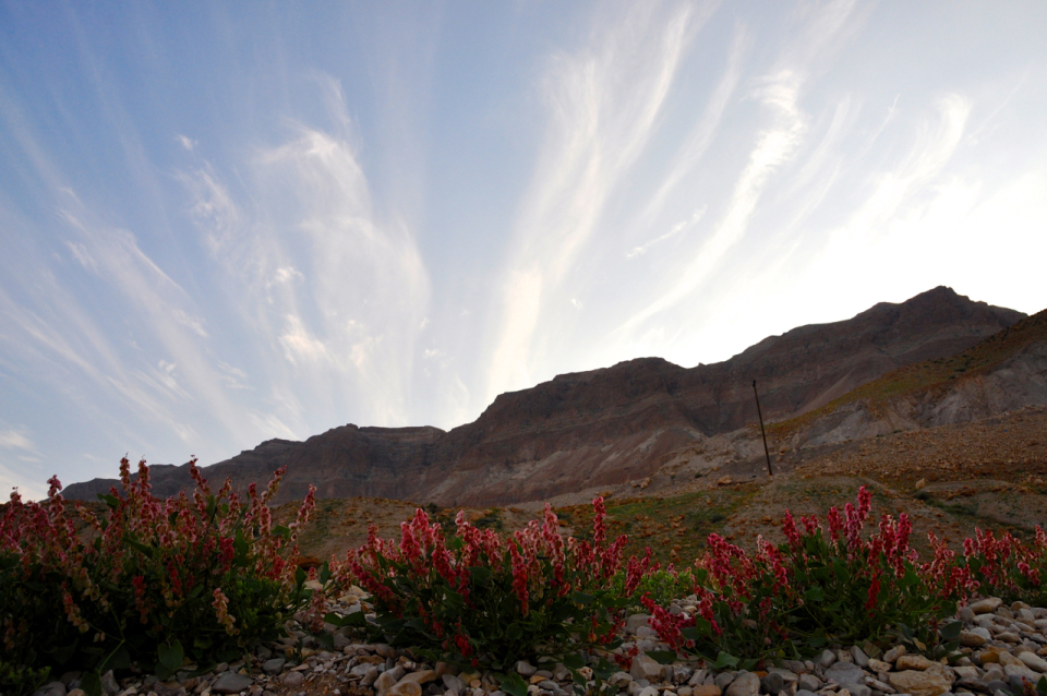 flowers-in-judean-desert.jpg