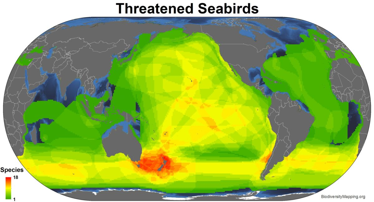 Seabirds_threatened-1200x648.jpg