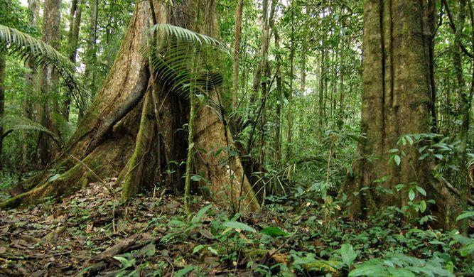 http---blogs.wwf.org.uk-wp-content-uploads-Rainforest-Acre-Amazon.jpg