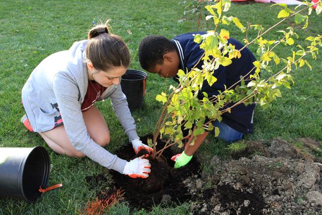 The Cleveland Tree Plan. Courtesy of  Sustainable Cleveland