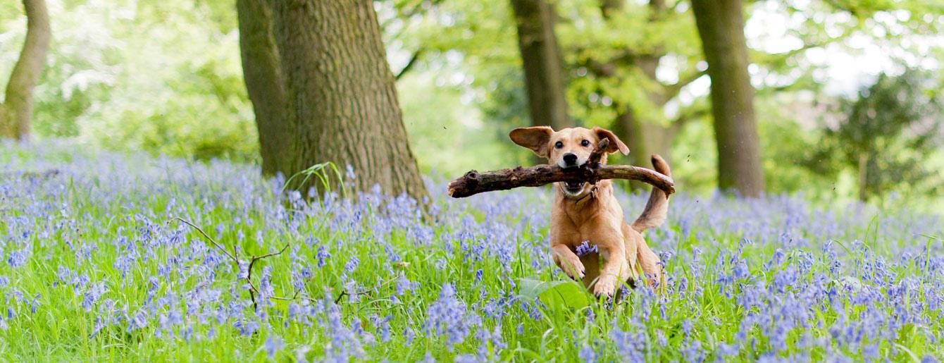 Pet-friendly-bluebells.jpg
