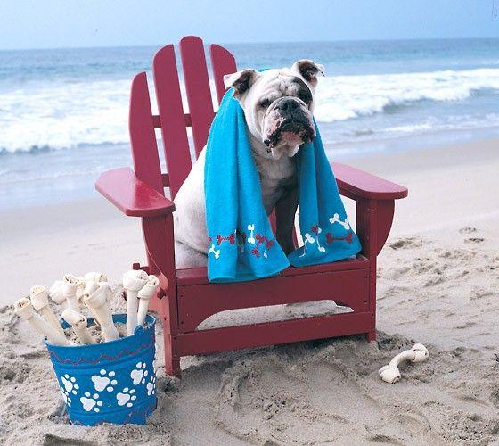 6a5e63dc4db6a8a92b4c57056a6aff74--adirondack-chairs-beach-bum.jpg
