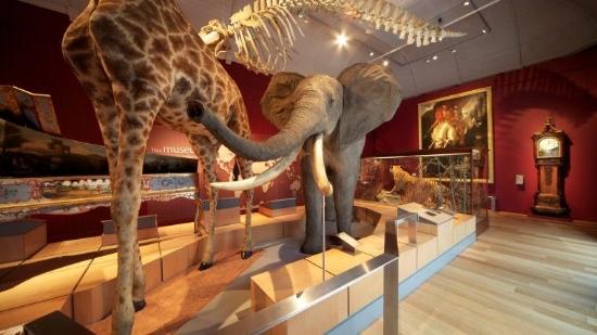 Royal Albert Memorial Museum
